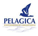 pelagica